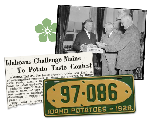Idaho vs Maine Potato Taste Contest